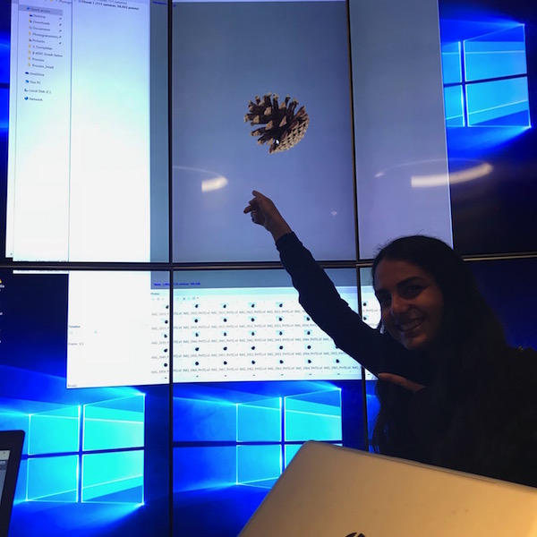 3D pinecone on screen
